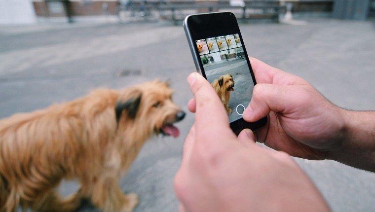 , 10 façons dont votre vie change quand vous adoptez un chien