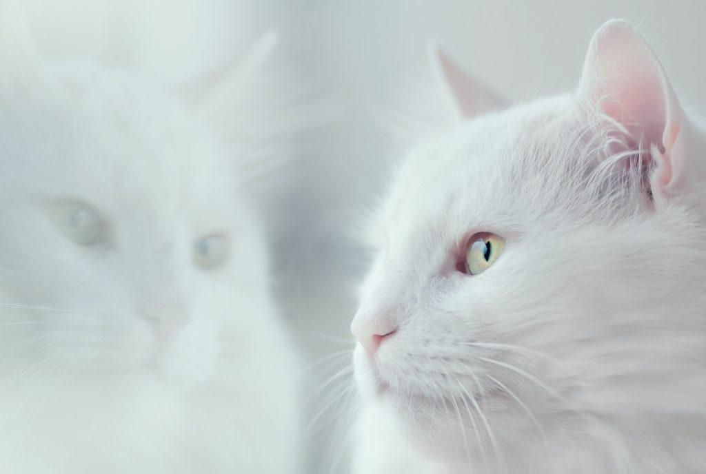 chat,éternue, Pourquoi mon chat éternue ? Que faut-il faire?