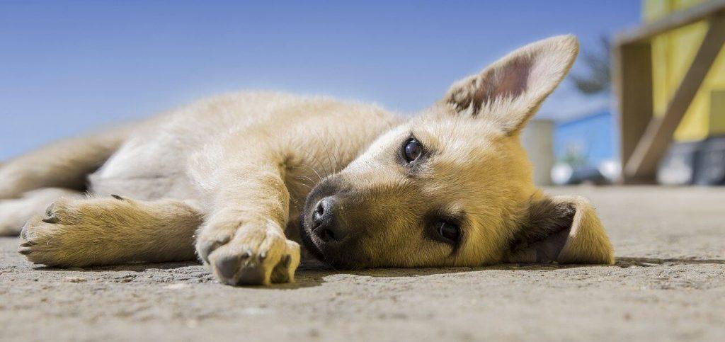 Apprendre à son chien à devenir propre, Comment apprendre à son chien à devenir propre ?