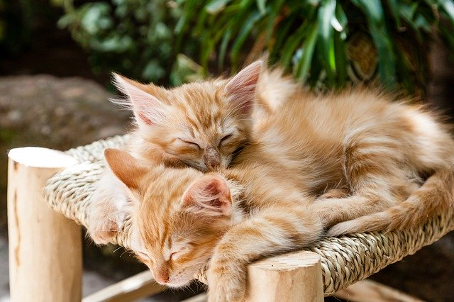 chaton,croquettes, A quel âge un chaton peut-il manger des croquettes ?