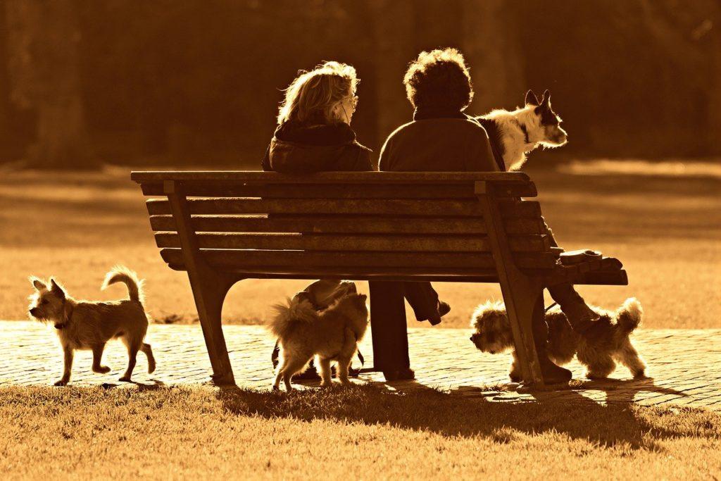socialisation du chiot, Socialisation du chiot : comment socialiser son chiot ?