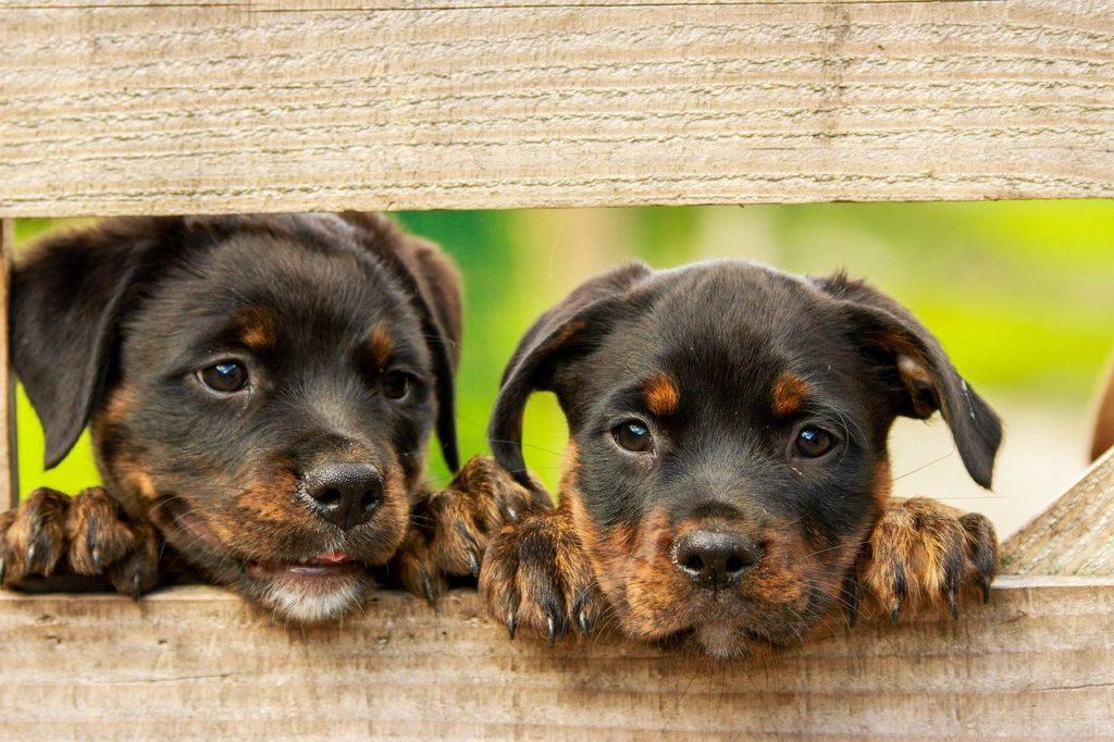 chien qui aboie, Chien qui aboie : le chien de mon voisin aboie trop