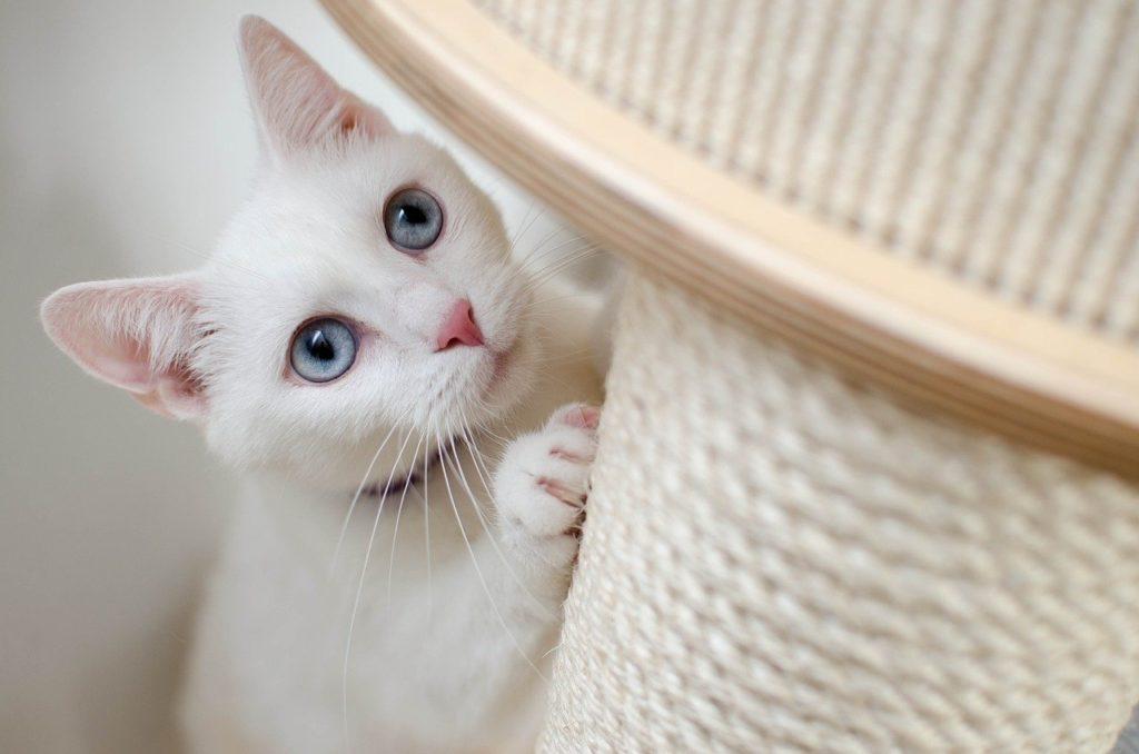 chat raye les meubles, Comment éviter qu'un chat raye les meubles ?