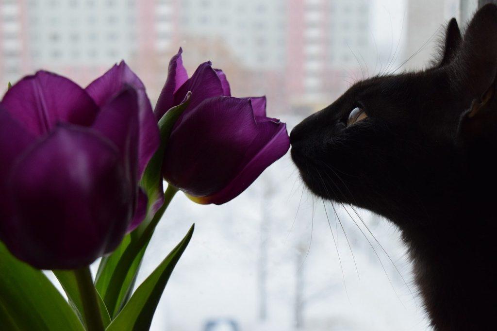 éviter qu'un chat s'ennuie, Comment éviter qu'un chat s'ennuie ?
