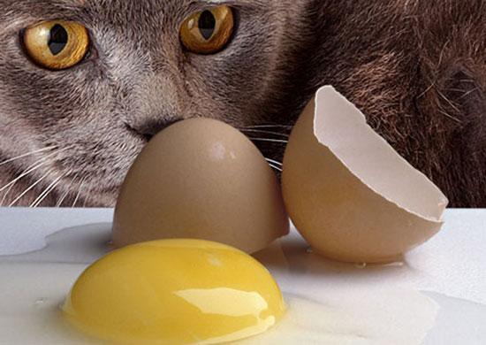 salmonellose chez le chat, Salmonellose chez le chat: symptômes, causes et traitements