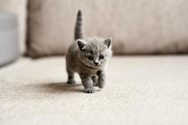 Reconnaître le sexe d'un chat,Reconnaître le sexe d'un chaton, Comment reconnaître un mâle d'une femelle chez le chat ?Apprendre à reconnaître le sexe d'un chat