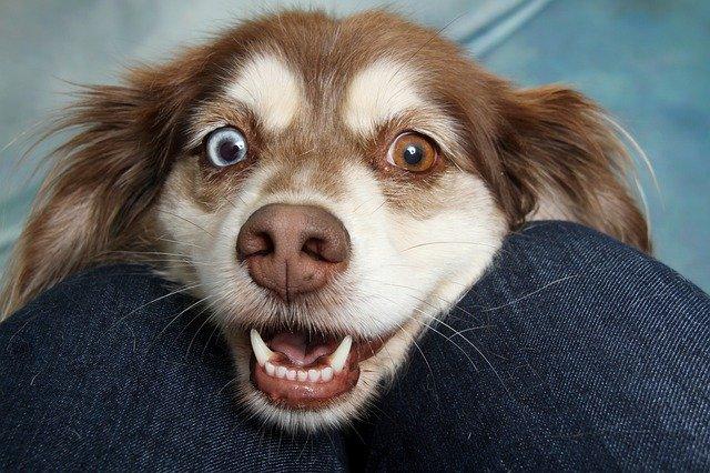 , Comment communique un chien : mon chien me parle !
